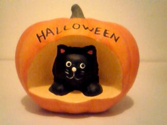*cat goods*