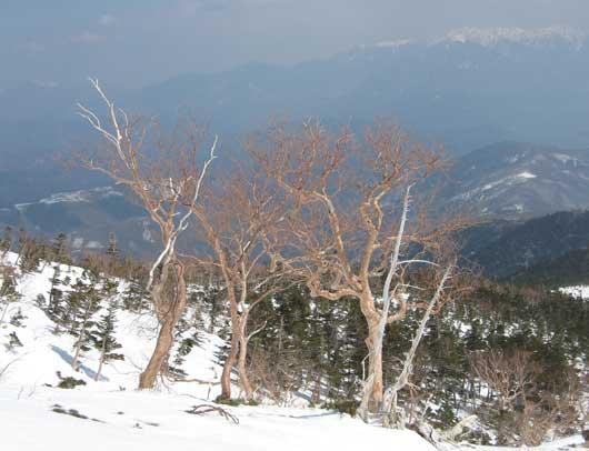 アルプスと樹木