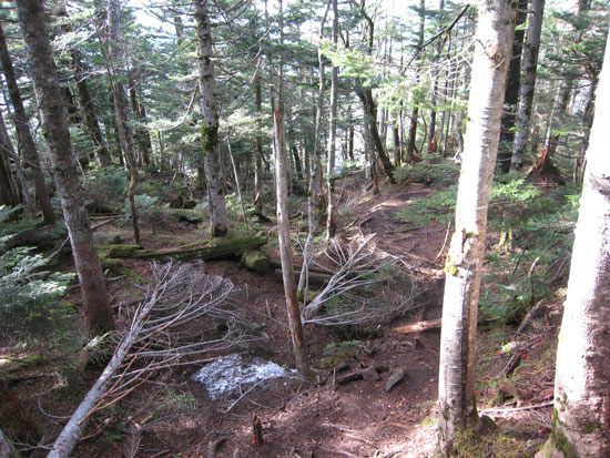 山頂からの下り道