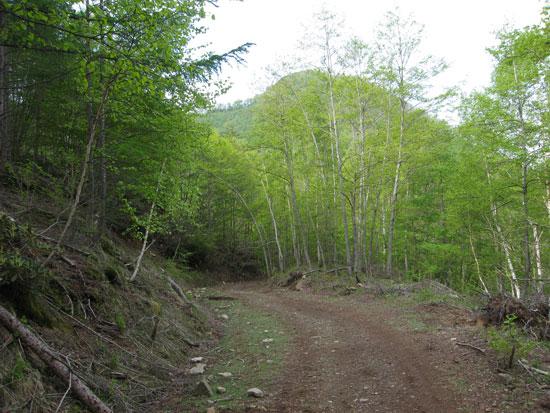 林道の新緑