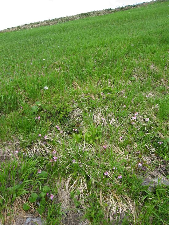 草原とお花
