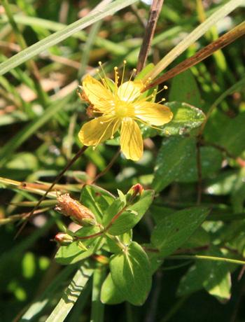 黄色の花2