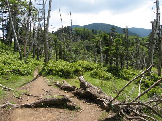 立ち枯れの樹林帯