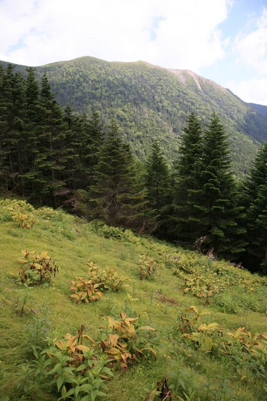 仁田岳と草地