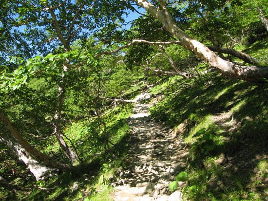 木漏れ日の登山道.