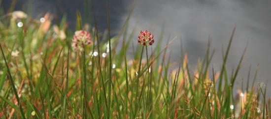赤い花の実