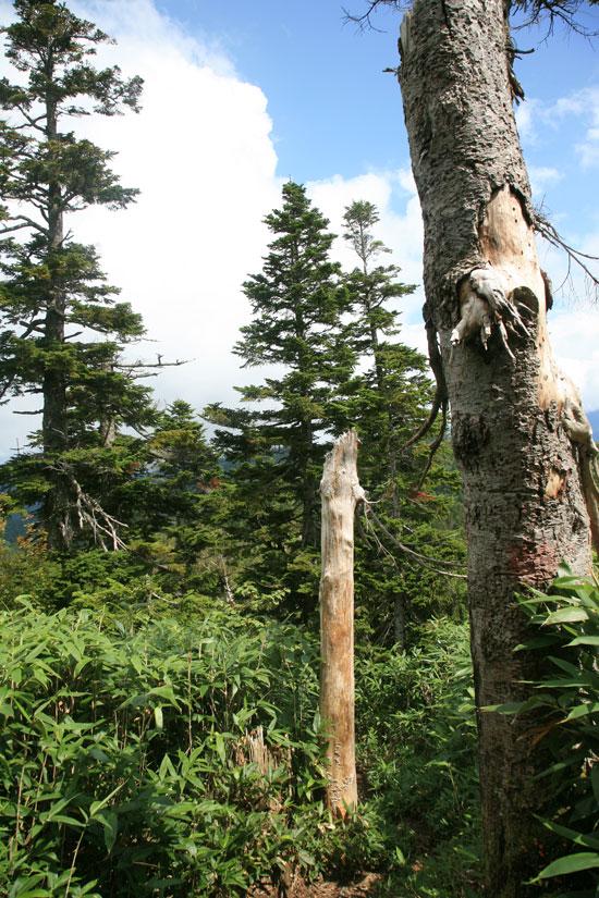 いろんな木