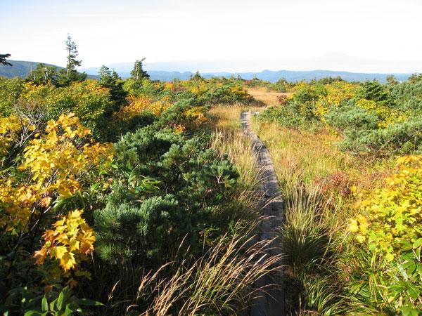 黄葉の湿原