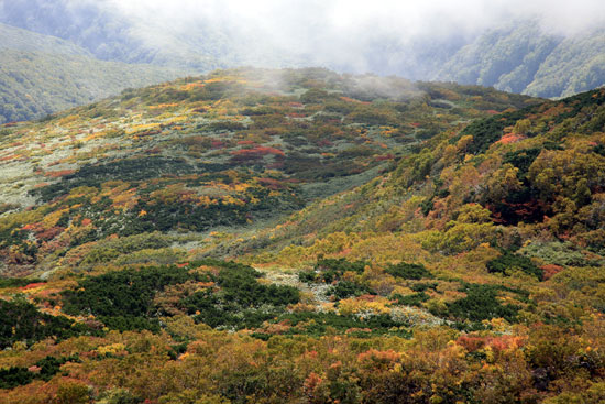 山頂からの紅葉