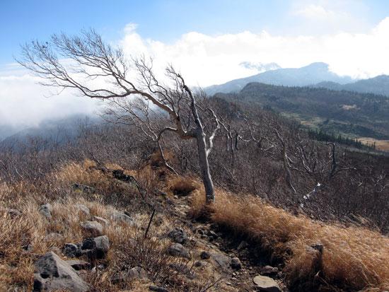 特徴的な木