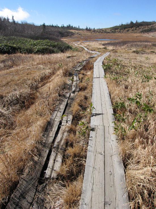 乾いた木道