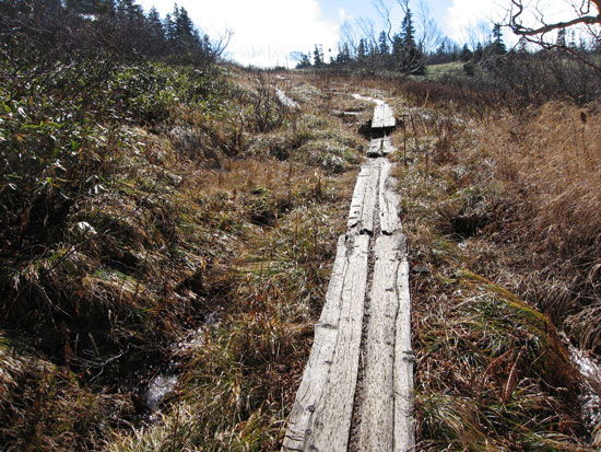 乾いた木道を歩き