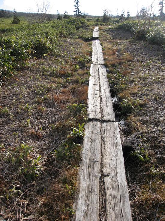 一人で木道歩き