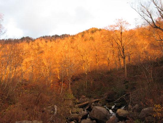 夕焼けの森