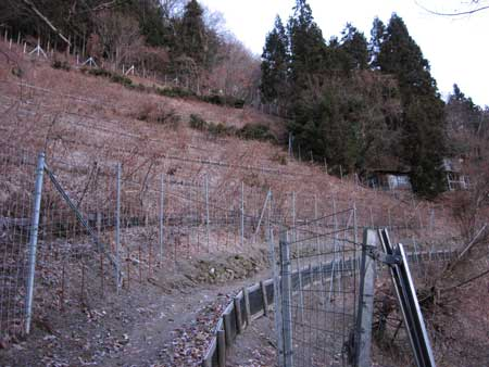 柵に囲まれた畑