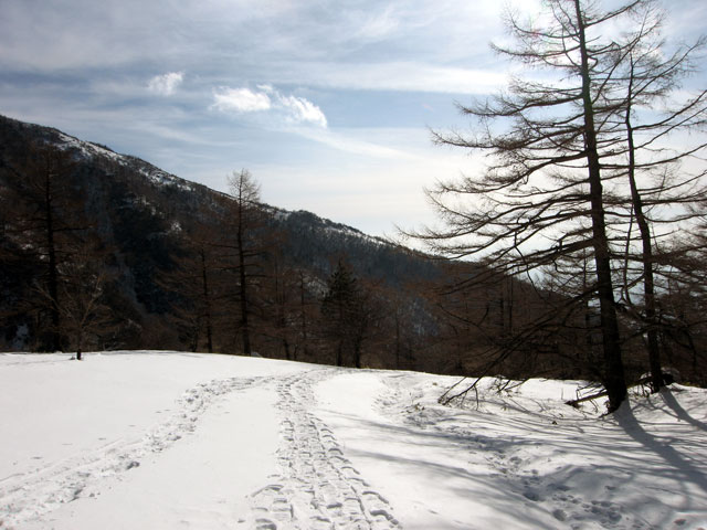 スノーシューの足跡