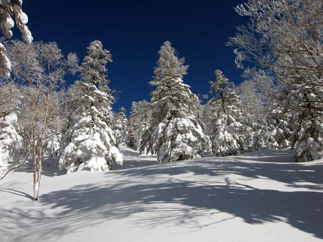フカフカの雪