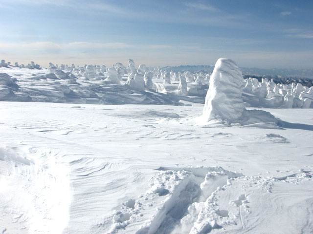 樹氷だらけ