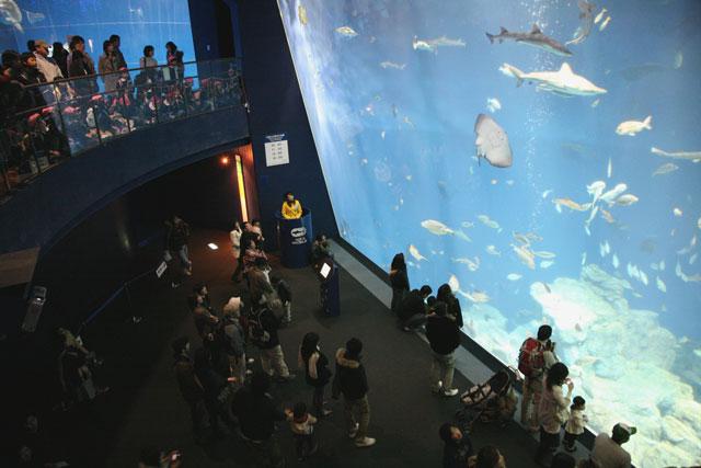 出会いの海