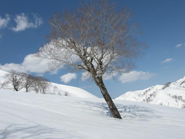 \1本の木