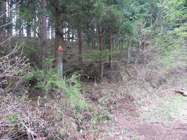 林道を横切り