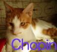 chotop1.jpg
