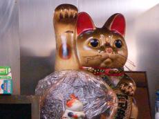 cat_20090608
