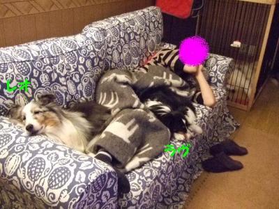 犬に囲まれる女