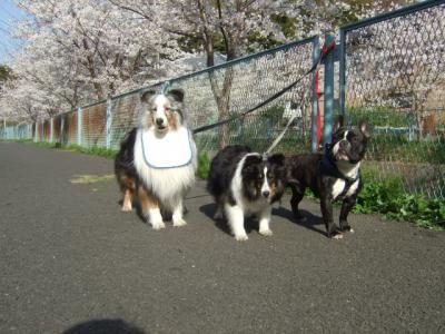 桜の木の下で記念写真