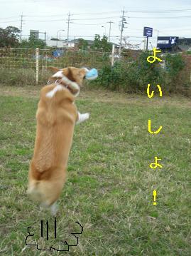 DSCN1151じゃ1