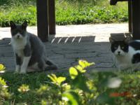 06cats1.jpg