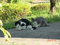 07cats2.jpg