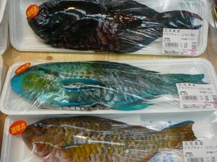 カラフル魚