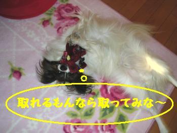20051130001521.jpg