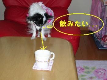 コーヒー飲みたい・・・