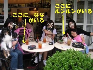 20060612234716.jpg