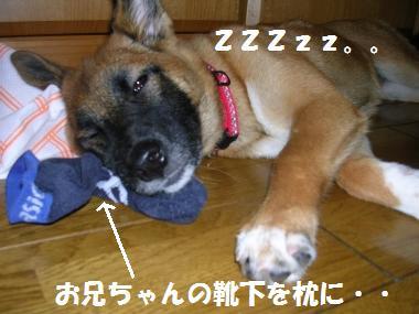 おやすみ~ZZzz(_ _*).。o0O