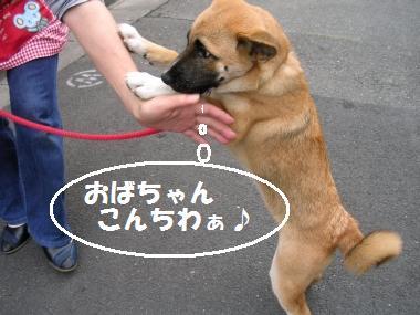 U,,・ω・)ノ【:*:.+:.コンチワン.:.+.:*:】