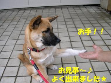 お手☆*~゜⌒('-'*)⌒゜~*☆