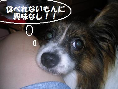 20060718165446.jpg