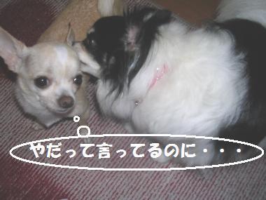 逃げないで!!byぷりん