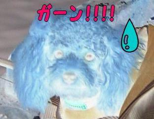 ガーン!!!!