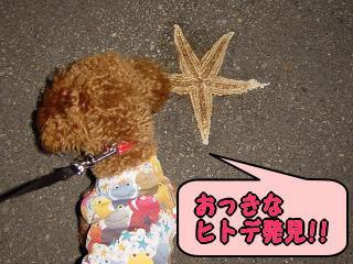 ヒトデ発見!!