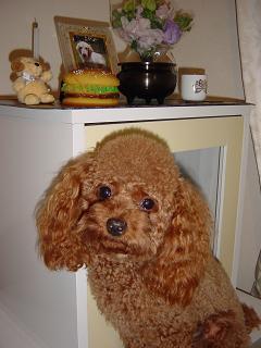 クッキーのお仏壇