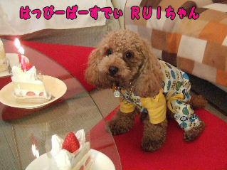 RUIちゃん2歳おめでとう