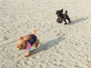 砂浜をダッシュ!