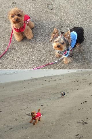 砂浜楽しい~
