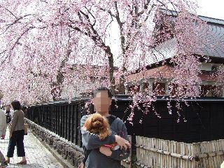 枝垂桜が見事でした