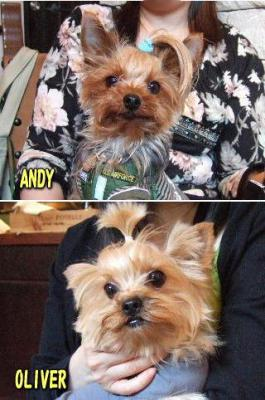 アンディ&OLIVER