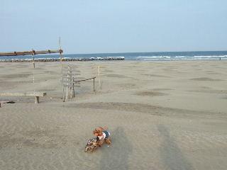 砂浜ダッシュ!